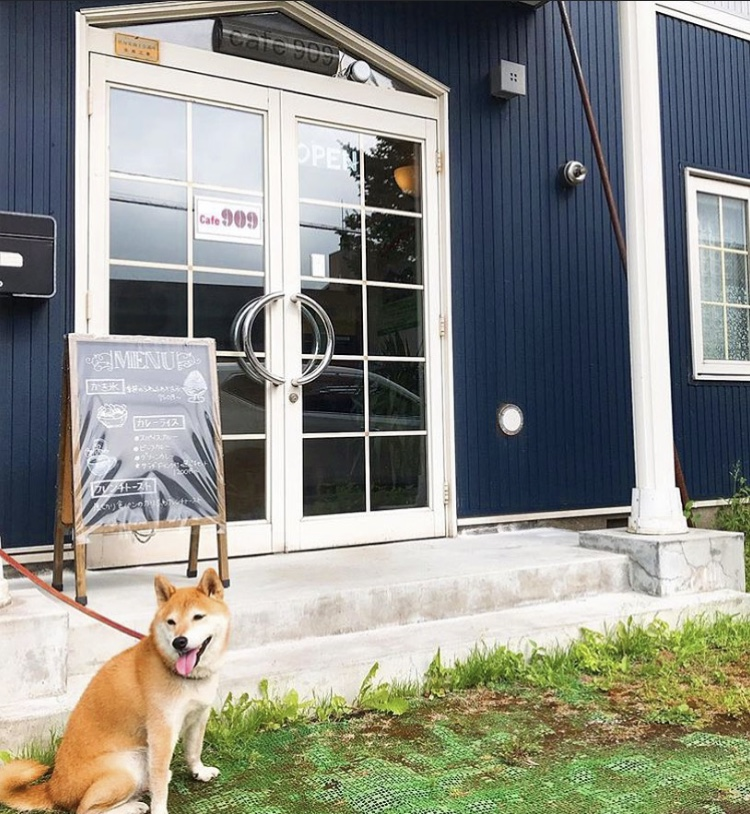 Dog in front of Cafe