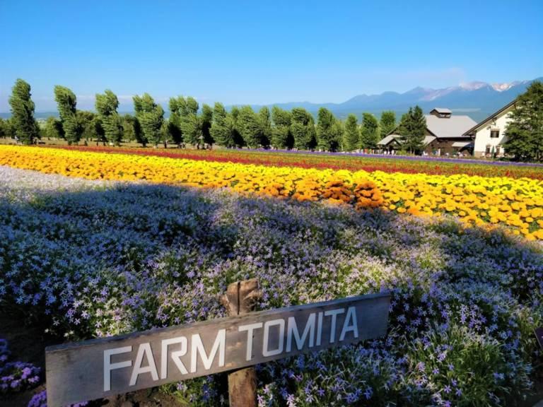 Farm Tomita in Furano, Hokkaido (Photo: Hokkaido Ski Club)